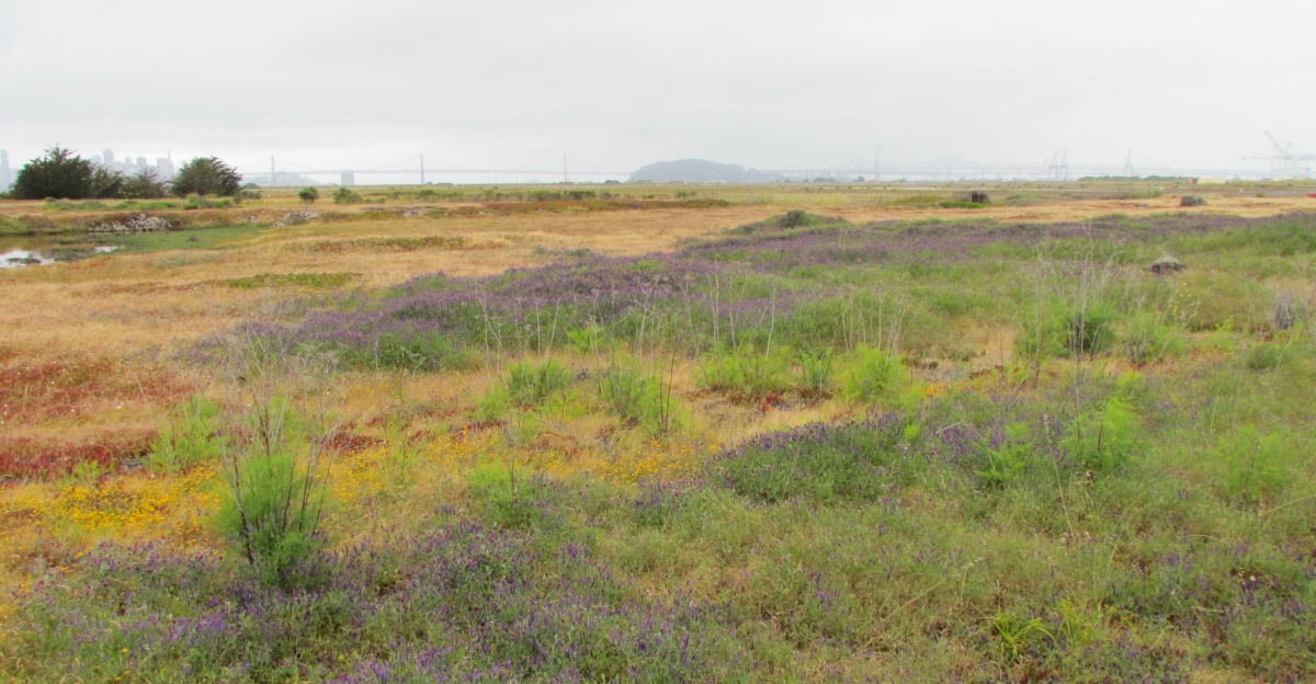 Landmark Destination Park System for Alameda Point