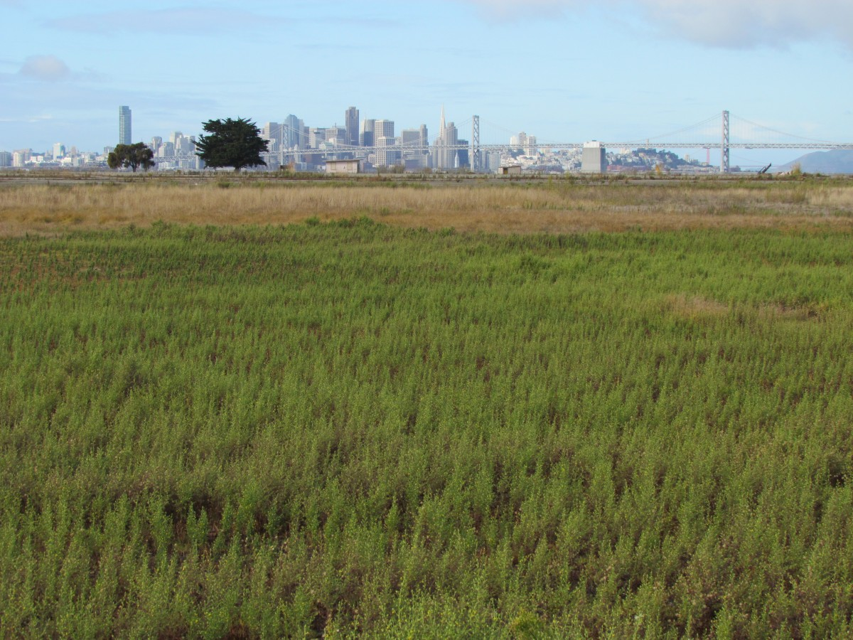 Video on open space at Alameda Point