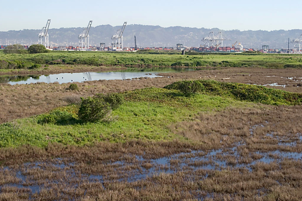 Scenic Alameda Point wildlife refuge section to be off limits with security fence