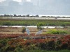 Great Egrets at the Runway Wetland area of Alameda Point wildlife refuge