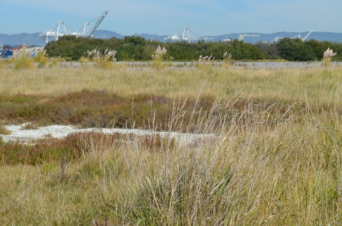 Wildlife refuge gets the ax in VA development at Alameda Point