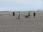 Volunteers on the tern site