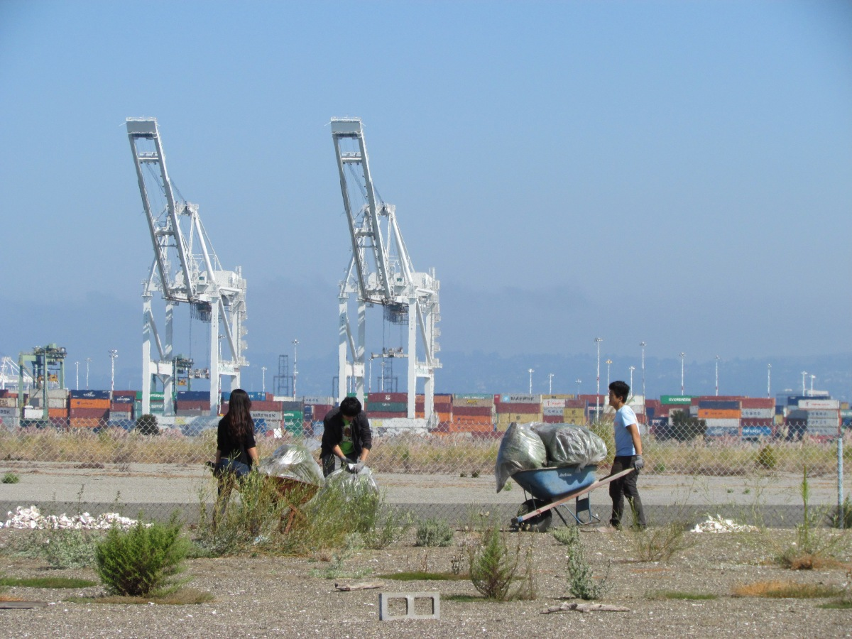 Least terns depart – volunteers move in at Alameda Point refuge