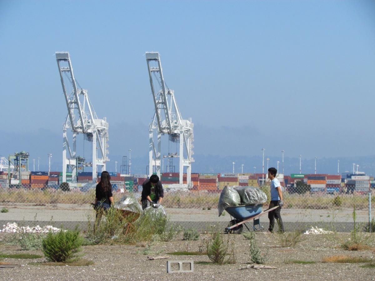 Least terns depart – volunteers move in at Alameda Pointrefuge
