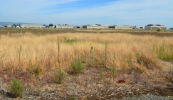 Existing grasslands between runways on wildlife refuge