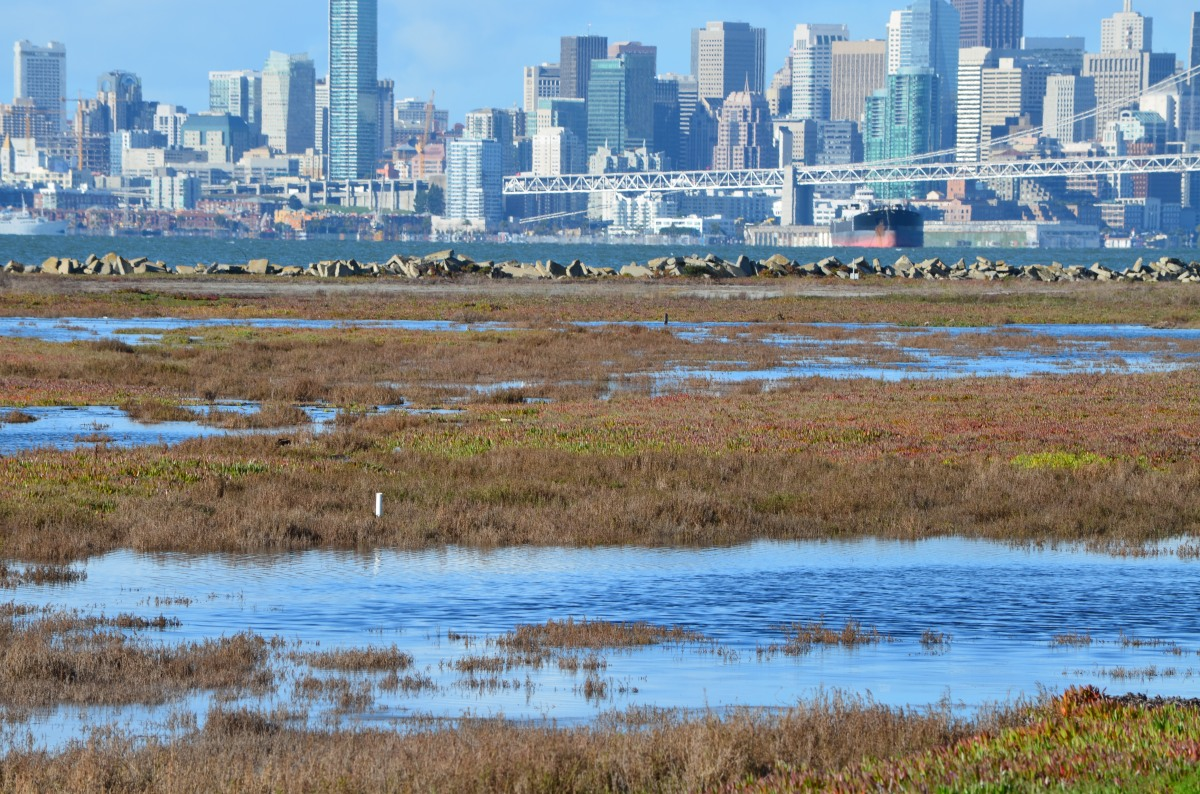 Navy and VA ignore economics, environment in killing Alameda National Wildlife Refuge