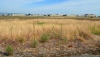 Wildlife refuge grassland, looking east toward hangars.