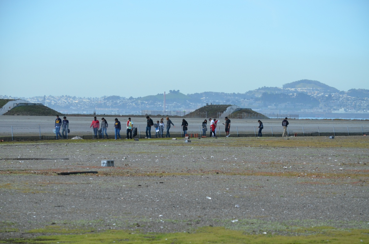 Volunteers maintain tern nesting area at Alameda Point Nature Reserve