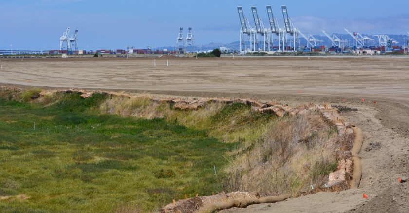 Transition from soil cover to wetland.  Port of Oakland in background.