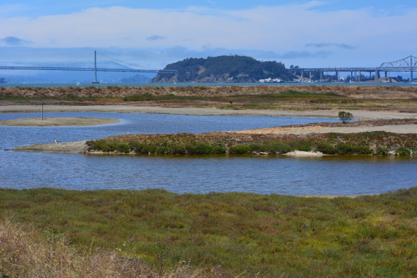 Partial view of wetland area on Site 2 - Alameda Point Nature Reserve.