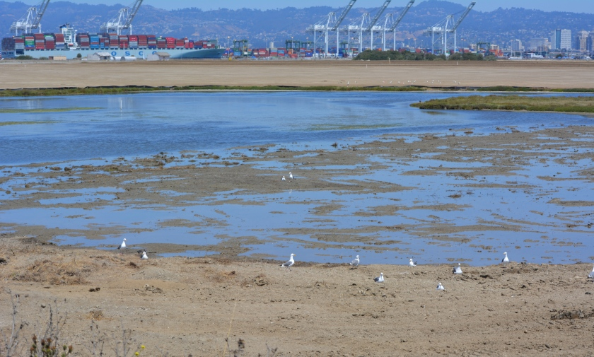 North Pond wetland connected to San Francisco Bay.  Port of Oakland in background.
