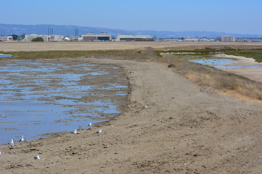 Showing wetland on the left that was added and will be allowed to naturally revegetate.  Wetland on the left connected to San Francisco Bay.  Freshwater wetland is to the right.  Looking east toward hangars.