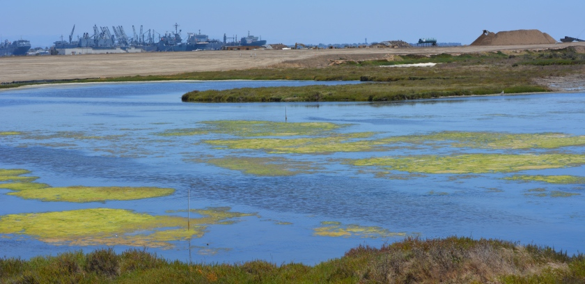 Partial view of wetland on southwest corner of Alameda Point.       Maritime ships and USS Hornet in background.