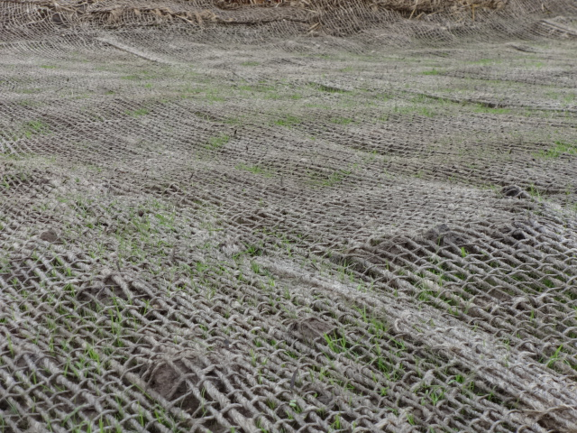 Jute mesh around wetland should, with grass starting to sprout.