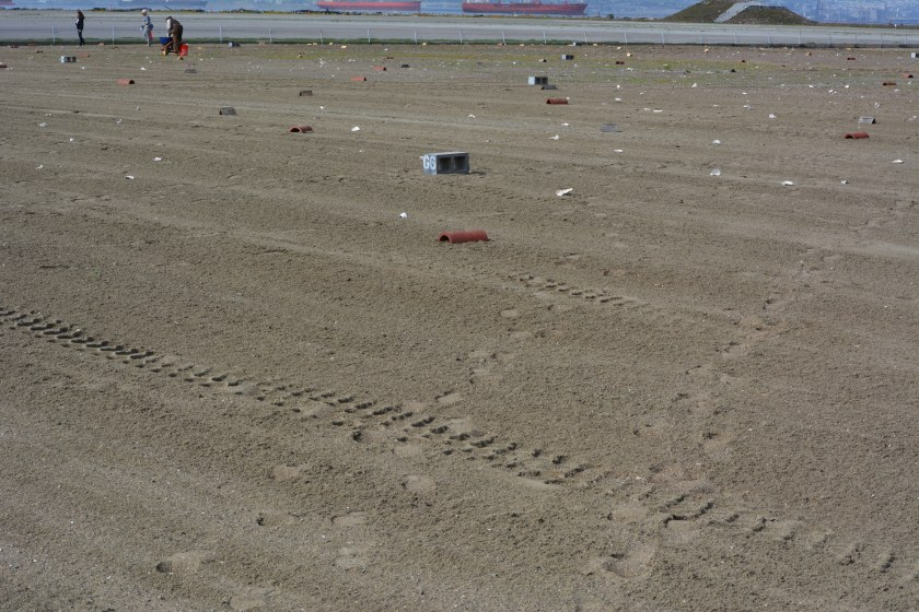 Fresh layer of sand on Alameda Point least tern nesting site.  Looking south, with ships in San Francisco Bay in background.