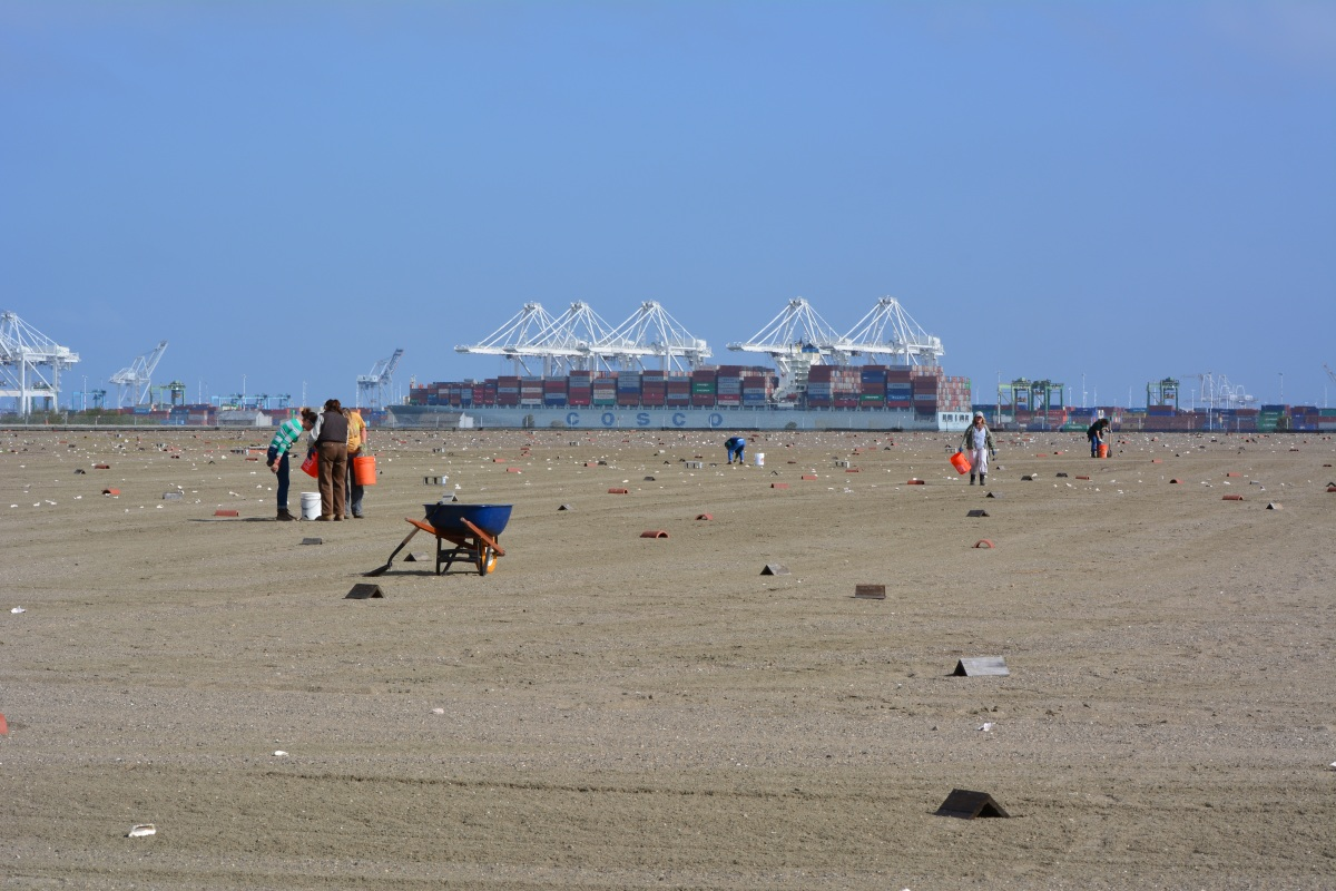 Least tern nesting area refurbished and ready for 2014 at Alameda Point