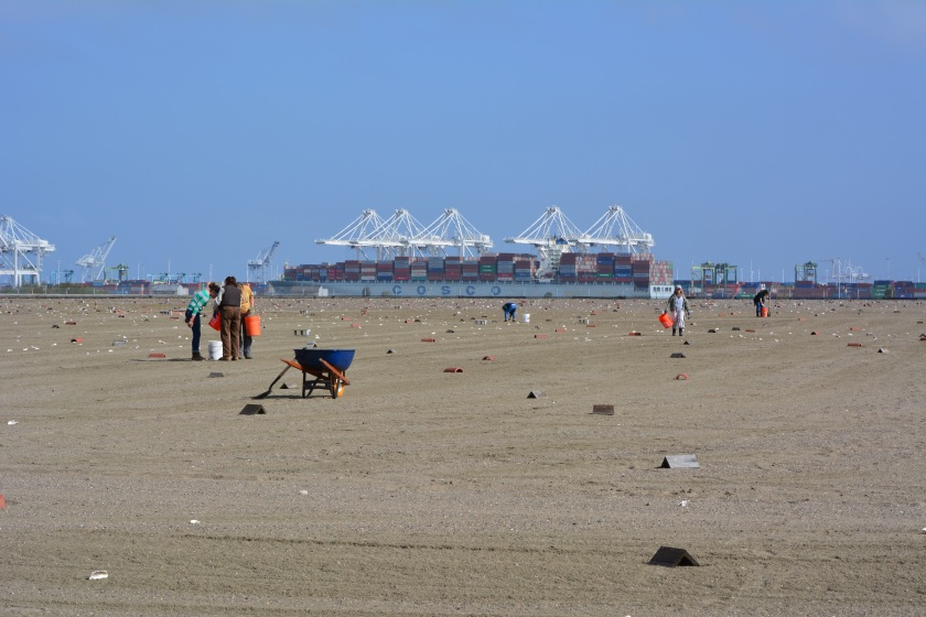 April 13, 2014 work party, with Port of Oakland in background.