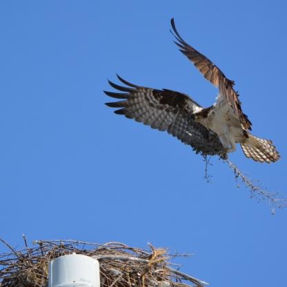 Nest building 1