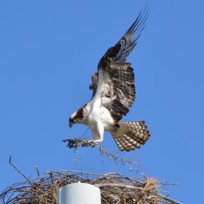 Nest building 2