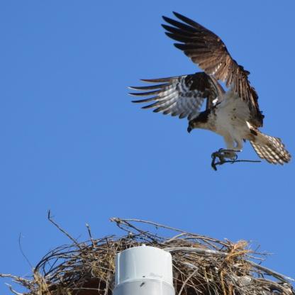 Nest building 4