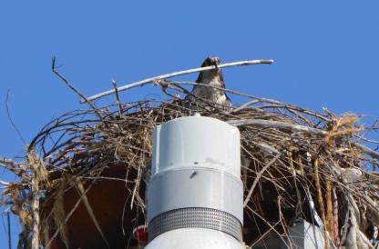 Nest building 6