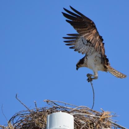 Nest building 8