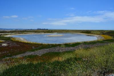 West Wetland Site 2 Alameda Point