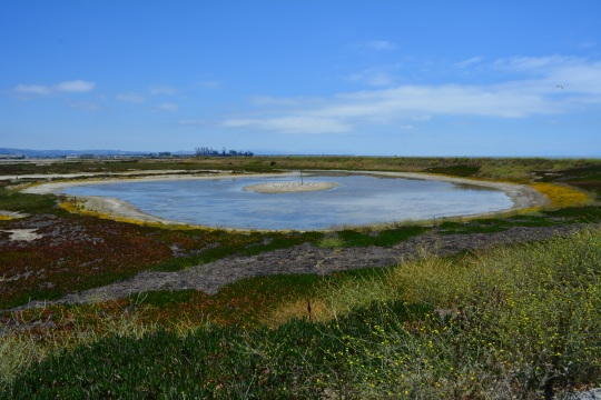 West Wetland Site 2 Alameda Point