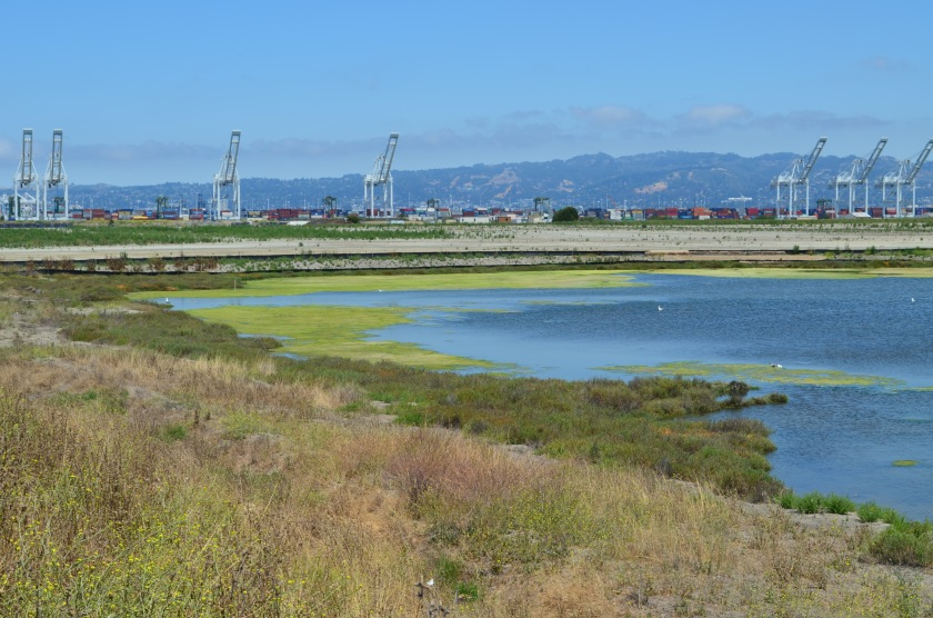 North Pond of West Wetland on southwest corner of Alameda Point.  Pond is connected to San Francisco Bay via a new culvert near upper left of pond.  Landfill soil cover is partially visible on far side of pond and will be seeded with flowering native grasses later this year.