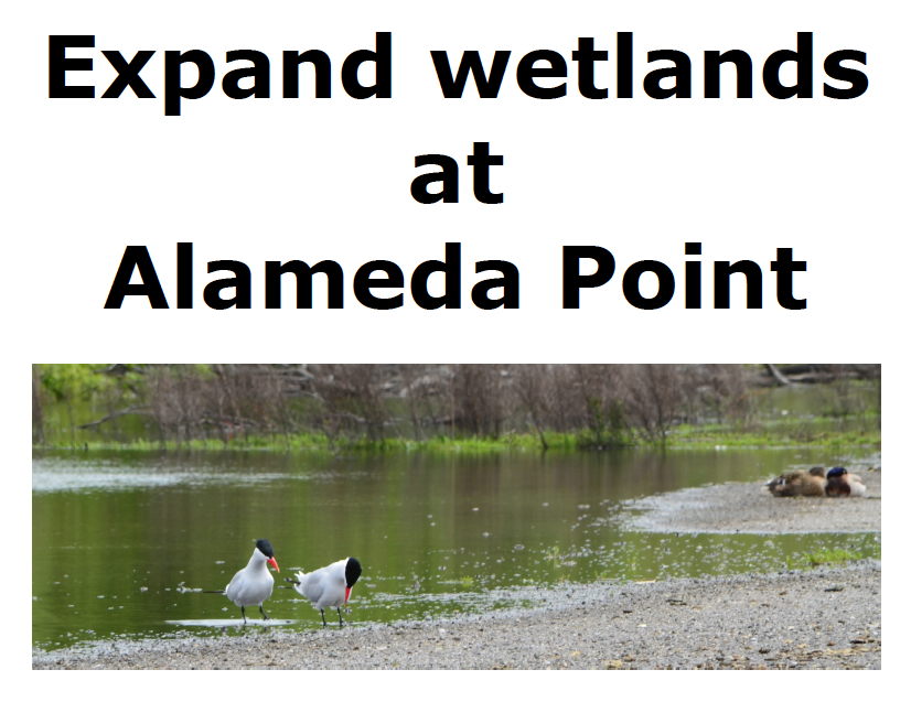 Caspian Terns at seasonal wetland on federal property next to future VA Clinic.