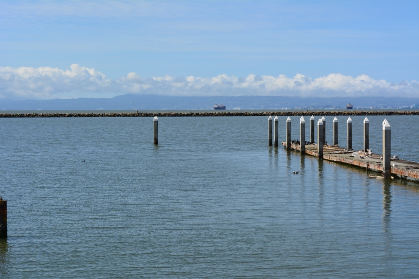 Recreational boating dock where harbor seals haul out, as it appeared on May 9, 2014.