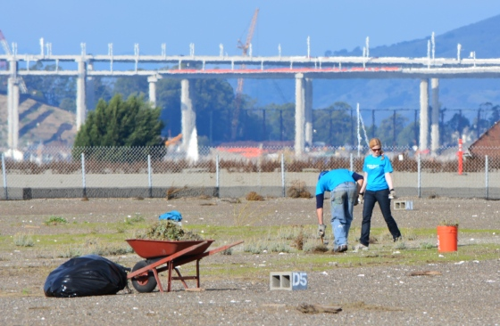 Circlepoint employees removing weeds during December 2014 work party. Bay Bridge in background.