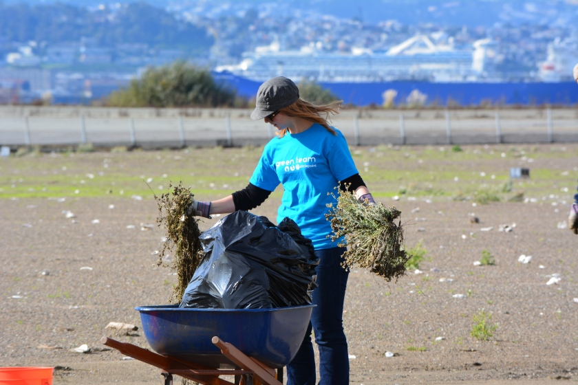 Circlepoint employee removing weeds during December 2014 work party.