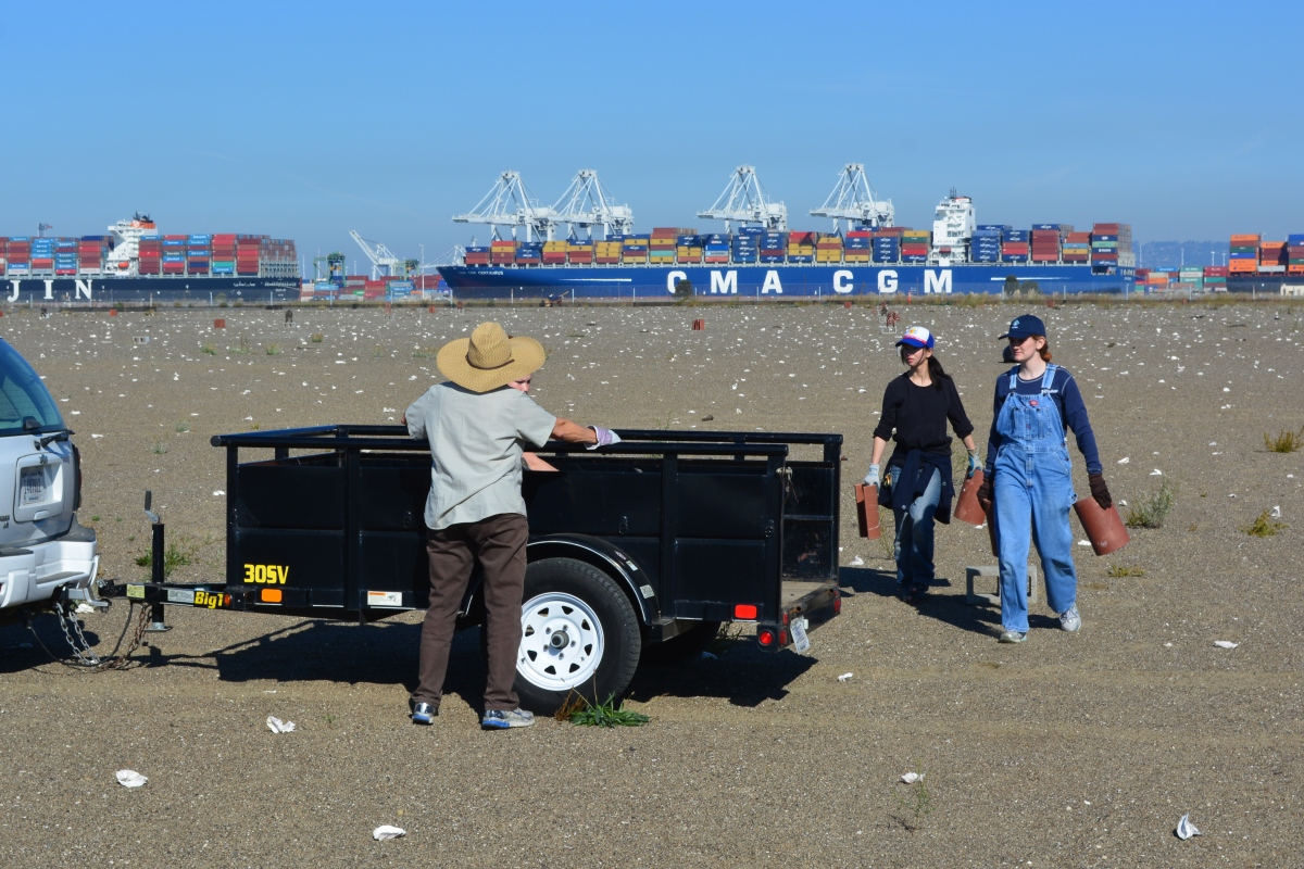 Volunteers help maintain successful least tern nesting site at Alameda Point