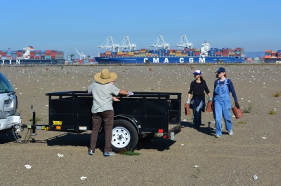 Tau Beta Pi members help out during the November 2014 work party.  Port of Oakland in background.