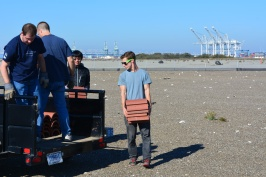 Tau Beta Pi students from UC Berkeley picking up drain tiles used as tern chick shelters. December 2014 work party.