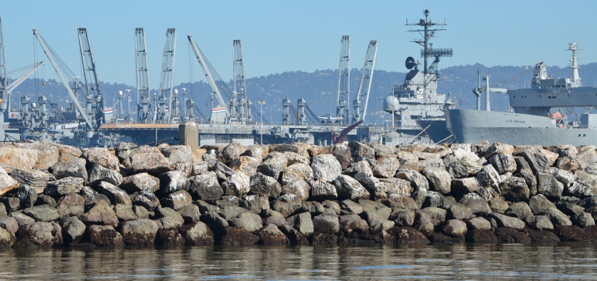 Breakwater Island landscape that Fisheries Service and city of Alameda say is suitable harbor seal haul-out habitat.