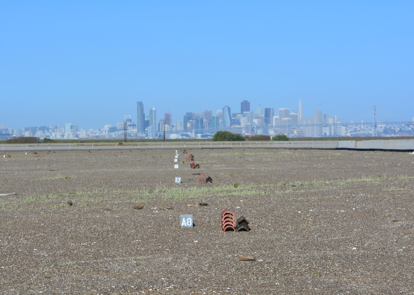 The view toward San Francisco at the start of the volunteer work day.  Lettered and number cinder blocks are used to record nesting activity by a grid system.  Tiles and A-frames were spread around the site for use as shelters.