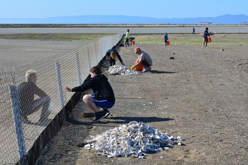 Piles of oyster shells.  Two students mending plastic mesh fencing to keep chicks from wandering through the chain link fence.