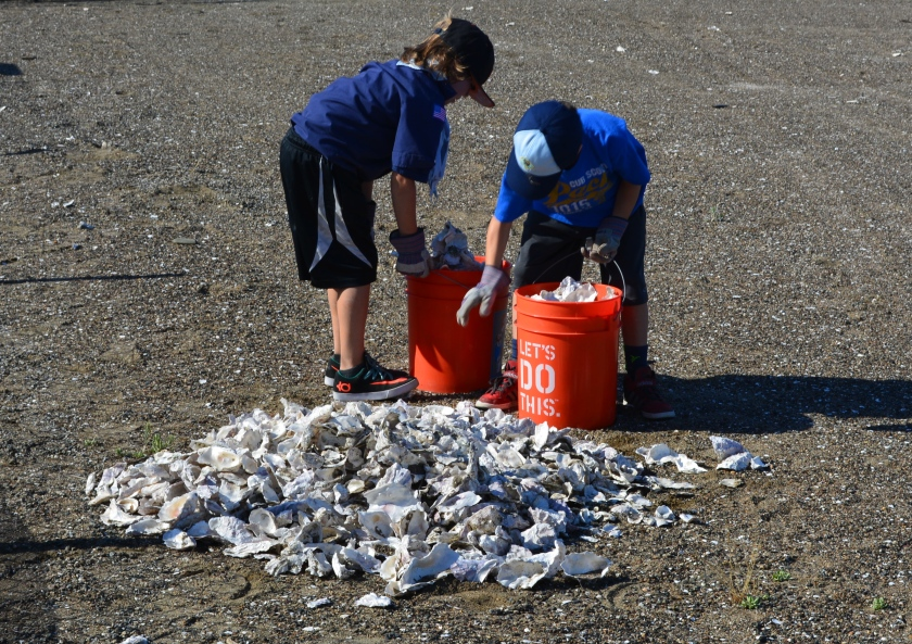 Scouts loading oyster shells