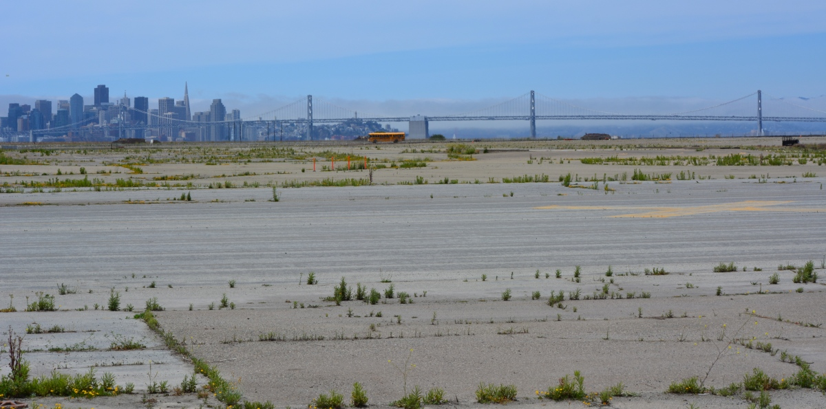 Policies differ on protectingterns