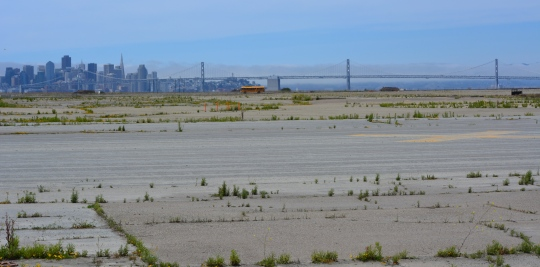 Least tern tour bus parked next to the nesting area on former Navy airfield.  San Francisco is in the background.