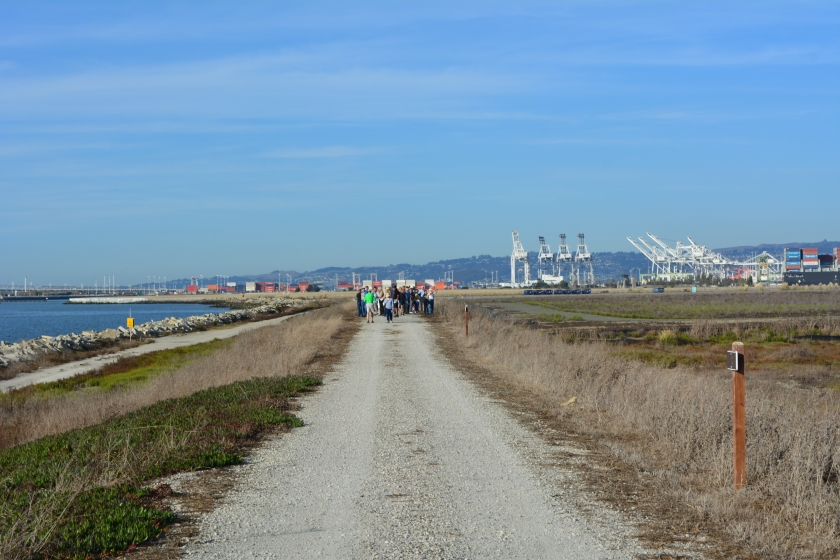 View of the trail on embankment, with tour group and Port of Oakland in the background. Wetlands are to the right. San Francisco Bay is to the left.