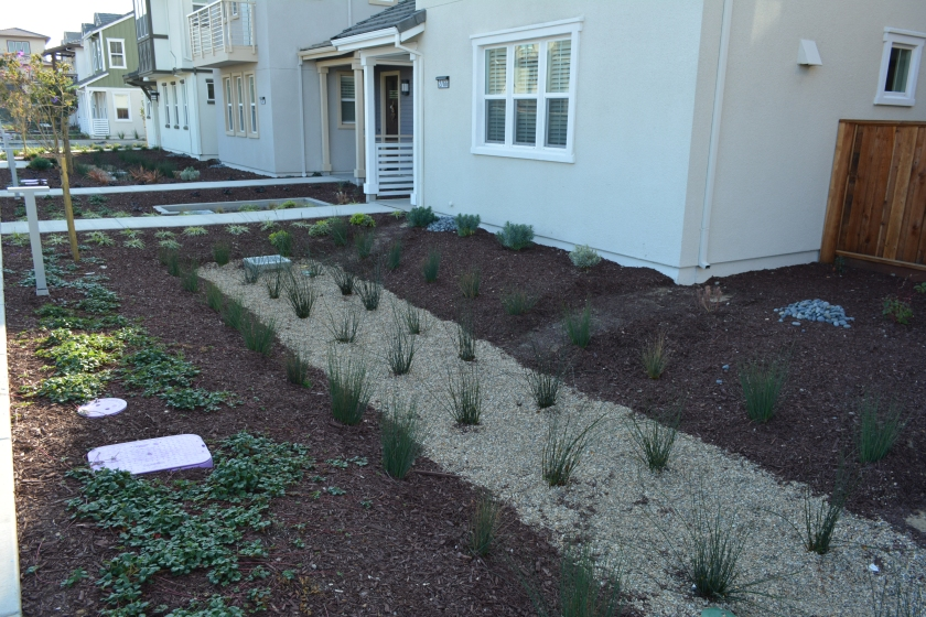 Bioswale natural filtration for water runoff in residential area of Alameda Landing.