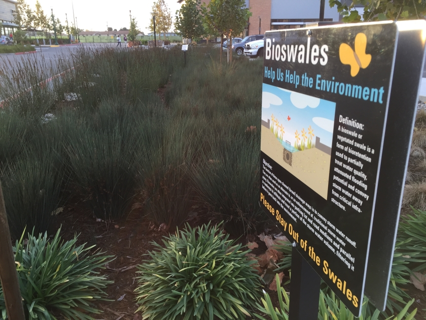 Bioswale water filtration in the parking lot of Alameda Landing retail area.