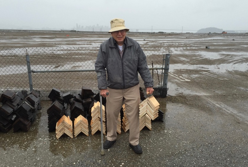 Longtime volunteer Frank Delfino with a fresh batch of wooden shelters that he made for the tern chicks to use for shelter.