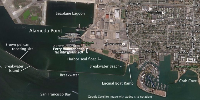 Permanent location of harbor seal float indicated on image, along with ferry maintenance facility. Groundbreaking for maintenance facility Sept. 15, 2016.